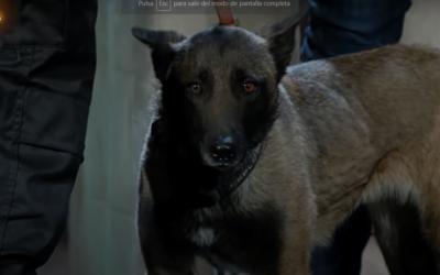Adiestramiento Canino ¿Lleva droga el público de La Resistencia?